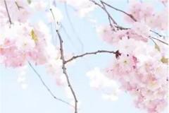 """Spring Time春风吹方大同♥""""吹红了桃花 吹绿了柳树...""""美好的3月已经来了冬雪萧瑟渐渐消融新生春草已日渐繁茂这样的日子里整个"""