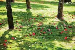 济州岛的四季鲜明,春季樱花开得遮天蔽日,夏季迷人的大海与细软的白沙滩等待着旅人的到来,秋日里汉拿山上的红叶与山顶的云雾遥相映照