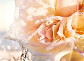 闪耀动人的Dior迪奥真我女神查理兹·塞隆(Charlize Theron)再次将Dior迪奥真我心悦香水的悦动芳息淋漓演绎。Dior迪奥